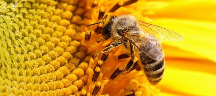 Полезные свойства пчел