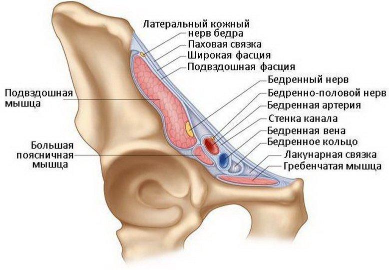 Топография нижней конечности