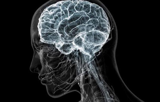 УЗИ головного мозга