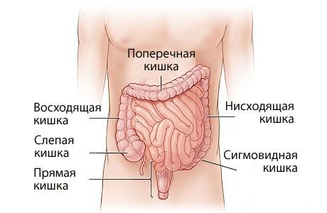 kishechnik_shema