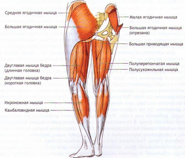 Признаки и терапия миозита мышц нижних конечностей