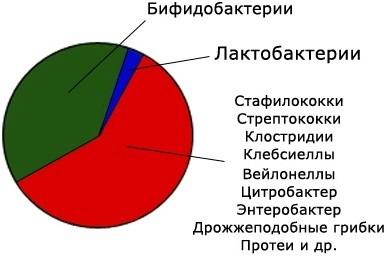 Poleznye_bacterii