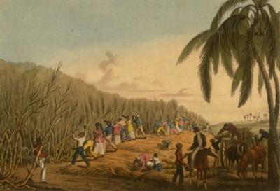 Основные разновидности и особенности рома Plantation. Цены на напиток