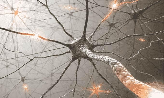 нервы схема