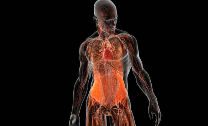 Что показывает МРТ всего тела