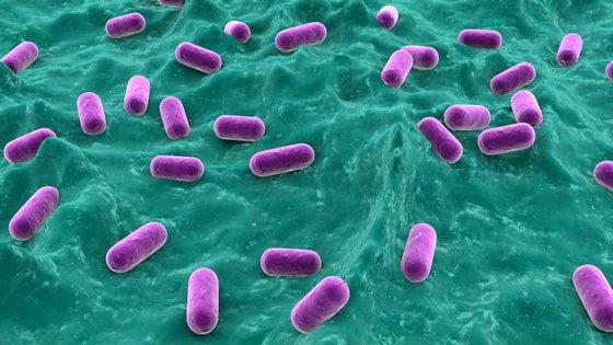 Bifidobakterii