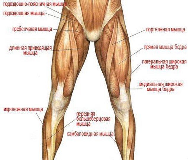 расположение мышц на ногах человека схема отправить граффити, нажмите