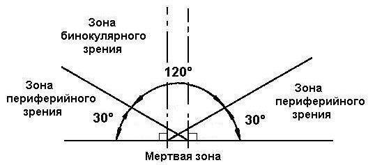 зона бинокулярного зрения