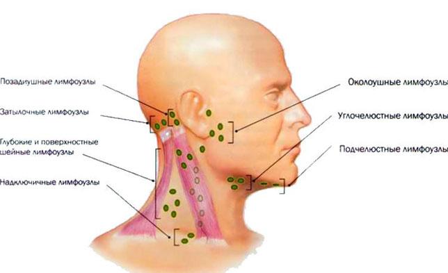 Размещение лимфоузлов в области шеи