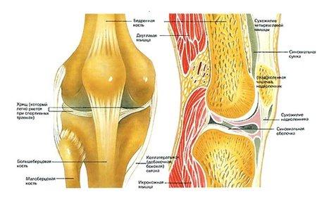 Виды и техника проведения пункции сустава
