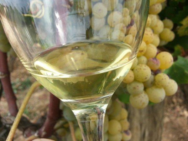 Вино Сотерн напиток, пораженный благородной плесенью